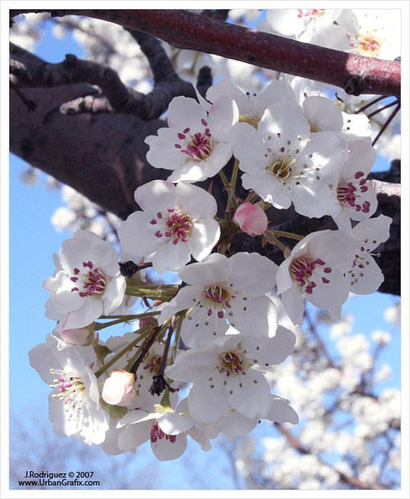 return_of_the_spring